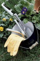 Prune and protect plants as a top garden task in February