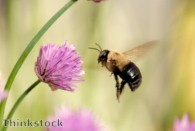 Creating a bee garden