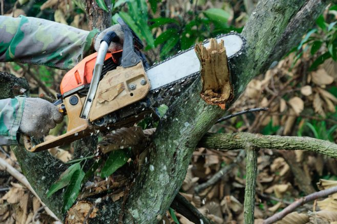 A chainsaw cutting wood